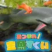 Switch向けとして『THE 体感!スポーツパック~テニス・ボウリング・ゴルフ・ビリヤード~』と『THE バラエティゲーム大集合~金魚すくい・カード・数字パズル・二角取り~』が2019年4月4日に発売決定!