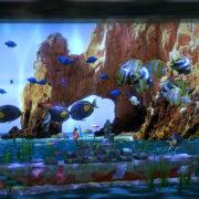 Switch版『Aqua TV』が海外向けとして2018年10月25日に配信決定!自由にカスタマイズできる美しい仮想水槽ゲーム