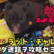『MAD RAT DEAD(マッドラットデッド)』の映像「マッド・ラット・チャレンジ~狂ッタ迷路ヲ攻略セヨ!~」が公開!