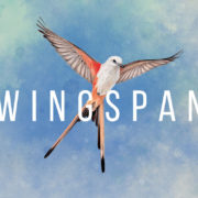 Switch用ソフト『WINGSPAN (ウイングスパン)』が2020年12月24日に配信決定!